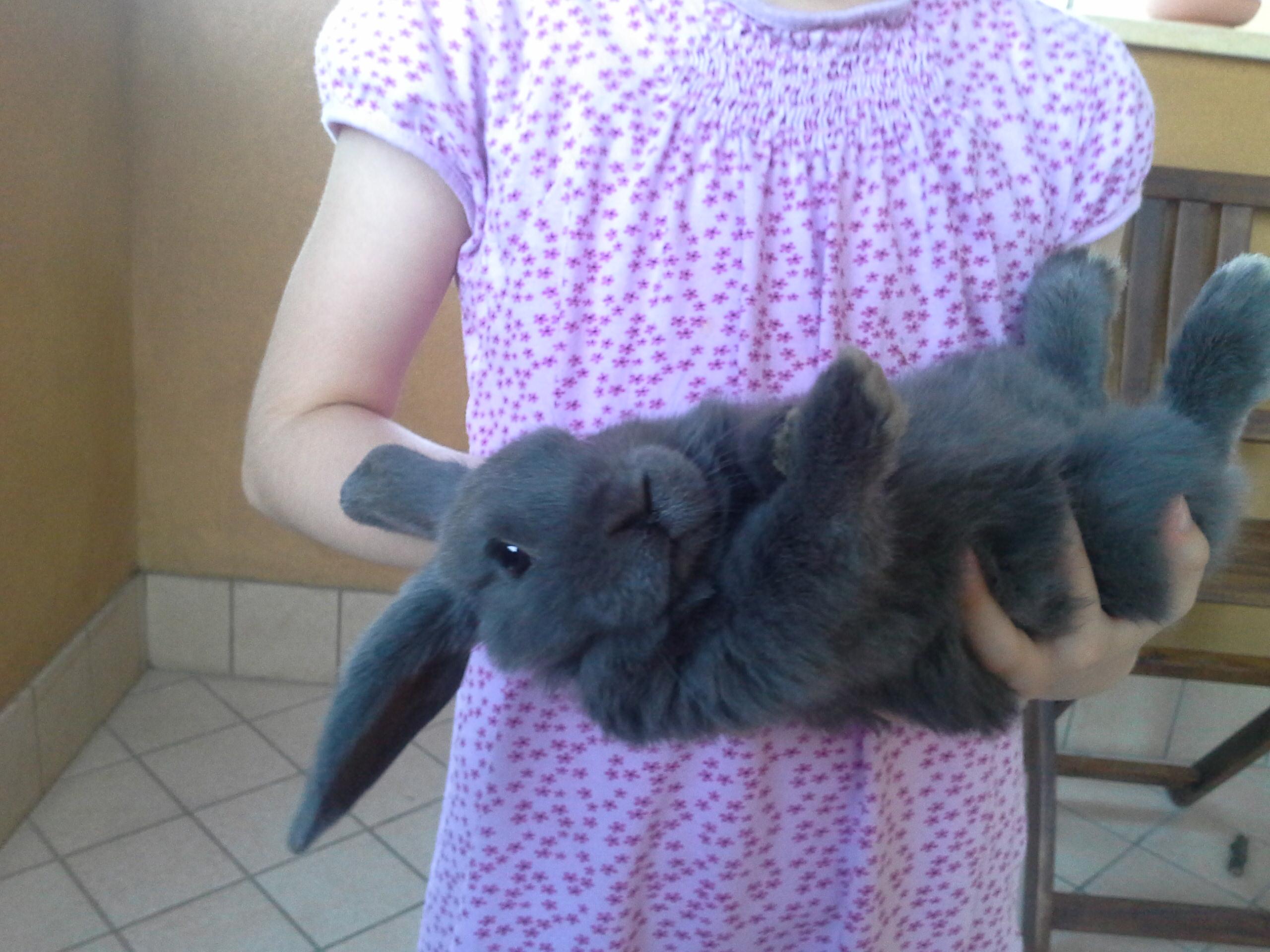 Come addomesticare un coniglio nano infoperte - Lettiera coniglio nano ...