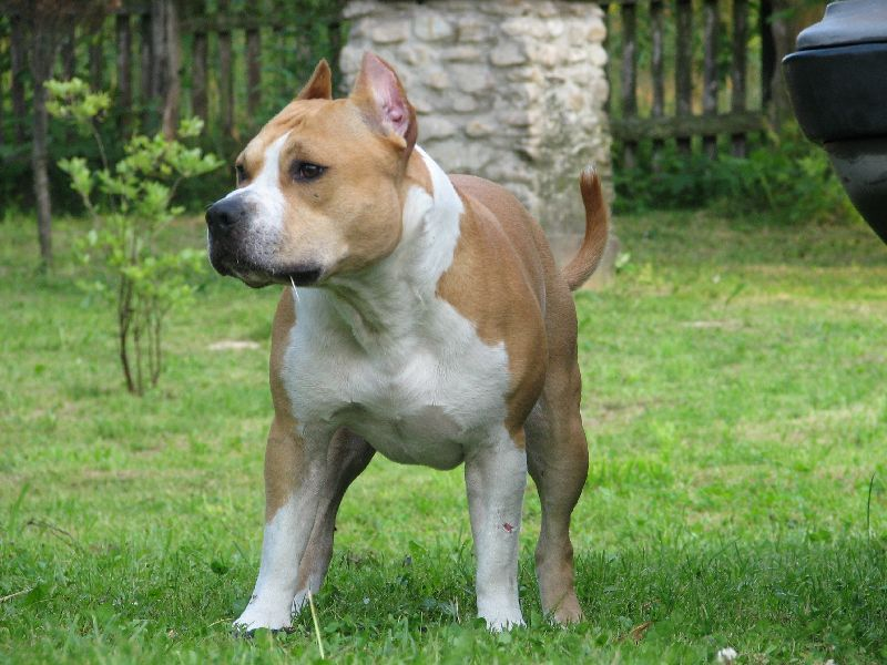 Dogs Home Staffordshire