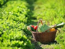 giardinaggio semina estiva