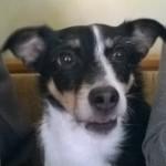 Parlare con il proprio cane, i cani capiscono il linguaggio umano?, comunicare con i cani, i cani interpretano il nostro linguaggio