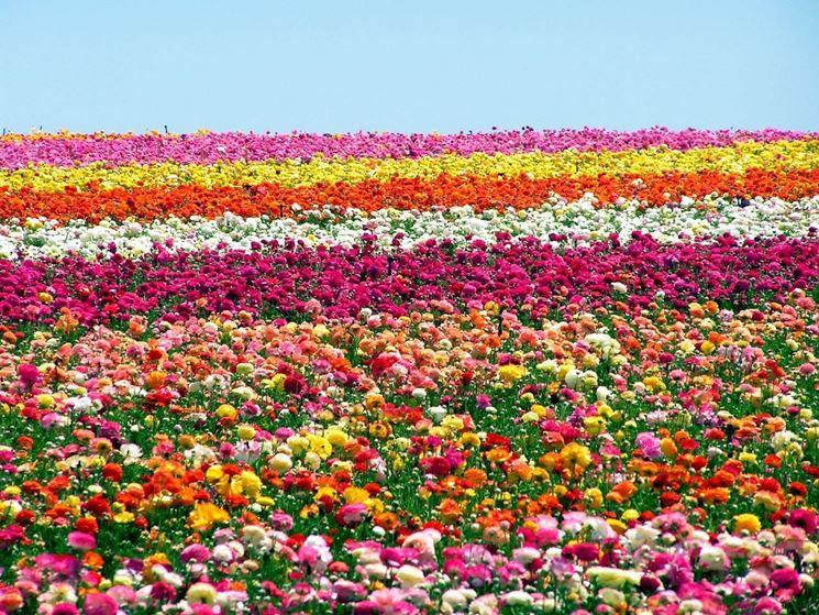 Ben noto Linguaggio dei fiori | Infoperte MO97