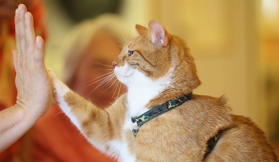 Animali domestici giochi da fare con il gatto infoperte - Cani che non vogliono fare il bagno ...