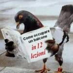 piccione apprendista  - umorismo in spiccioli