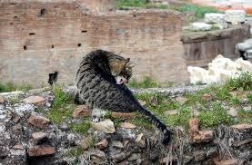 modo di dire, detto romanesco, cosa significa non c'è trippa per gatti, da dove deriva il detto non c'è trippa per gatti