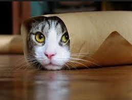 non dire gatto se non ce l'hai nel sacco, non dire quattro se non ce l'hai nel sacco, significato di non dire gatto se non ce l'hai nel sacco, trapattoni e non dire gatto, detto
