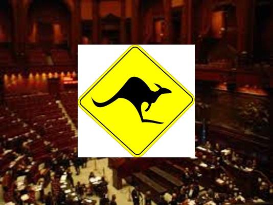 il canguro nelle procedure parlamentari, canguro in parlamento canguro legge diritti civili, canguro