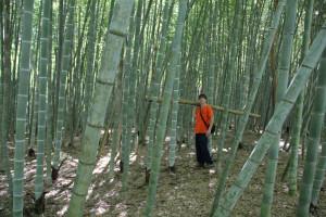 Alternativa alle colture tradizionali ormai poco for Vendita piante bambu gigante