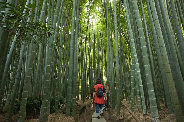 Alternativa alle colture tradizionali ormai poco for Bamboo coltivazione