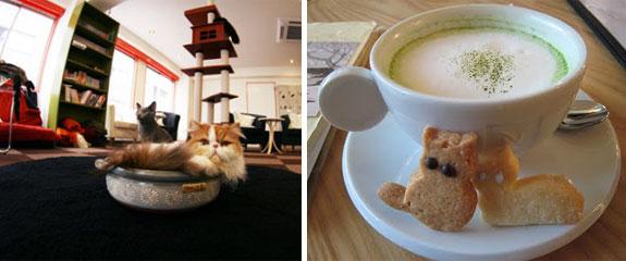 tokyo-calico-cat-cafe-1