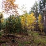 Natura autunno