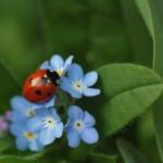 ladybug-308215_960_720