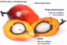 olio palma descr