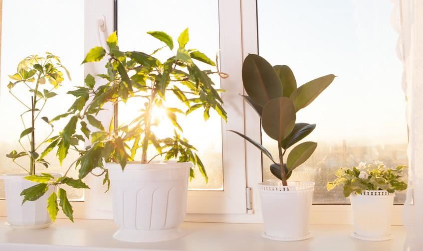 Come riportare le piante in casa