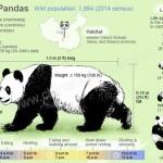 schema di studio sul panda maggiore