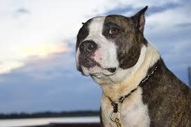 soffrire come un cane, perche si dice soffrire come un cane, da dove ha origine il detto soffrire come un cane.